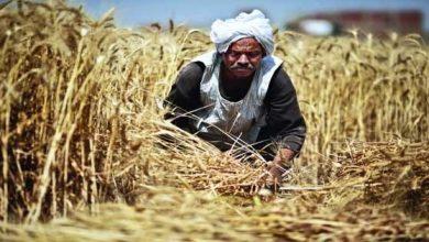 Photo of 108 جنيهات.. إيرادات هيئة «الإصلاح الزراعي» في 365 يوما فقط