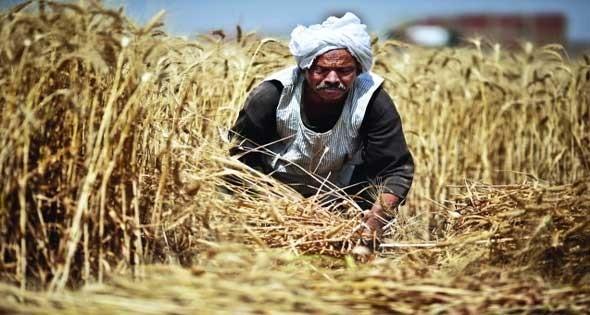 108 جنيهات.. إيرادات هيئة «الإصلاح الزراعي» في 365 يوما فقط