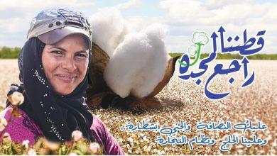 "Photo of ""قطاع الأعمال"": بيع 27.7 ألف قنطار بمزادات القطن في 4 محافظات خلال يوم واحد"
